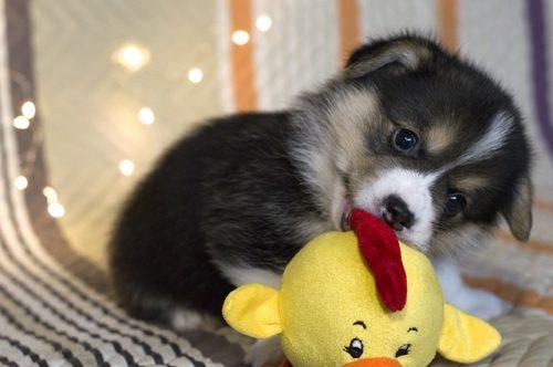 犬用おもちゃ