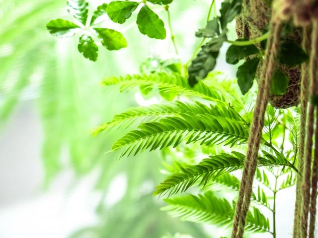 インテリアにして心地よい空間を・ギフトにも!大型観葉植物おすすめ10選