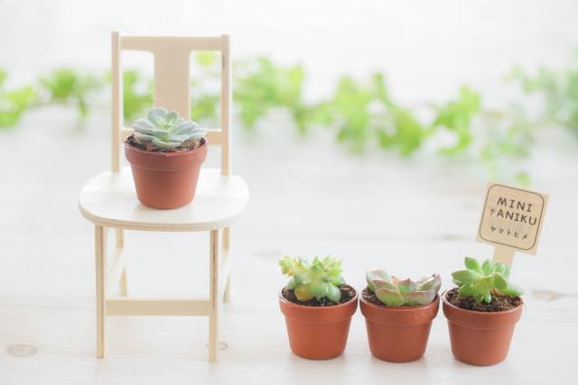 【見ているだけで癒される!】ギフトにもおすすめ・ミニ観葉植物10選